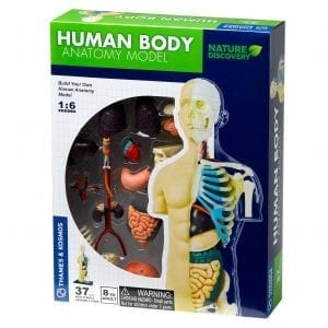 Nature Discovery Human Body Anatomy